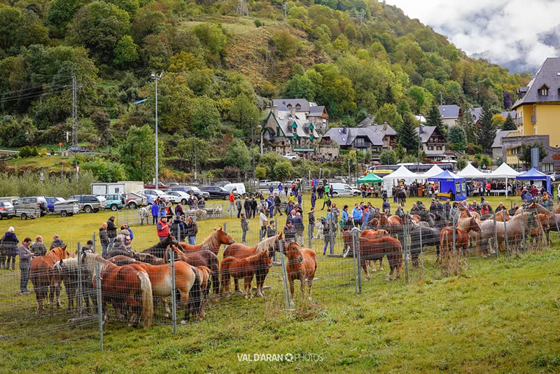 Feria ganadera de Vielha, Valle de Aran ©Val d'Aran Photos